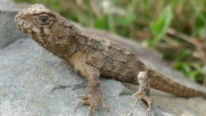 New Life for Ancient Reptiles